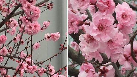 Australia blossoms